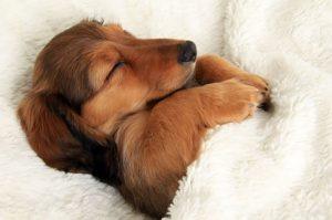 552505-650-1452527137-dog-sleeping-bed-funny-104__6051